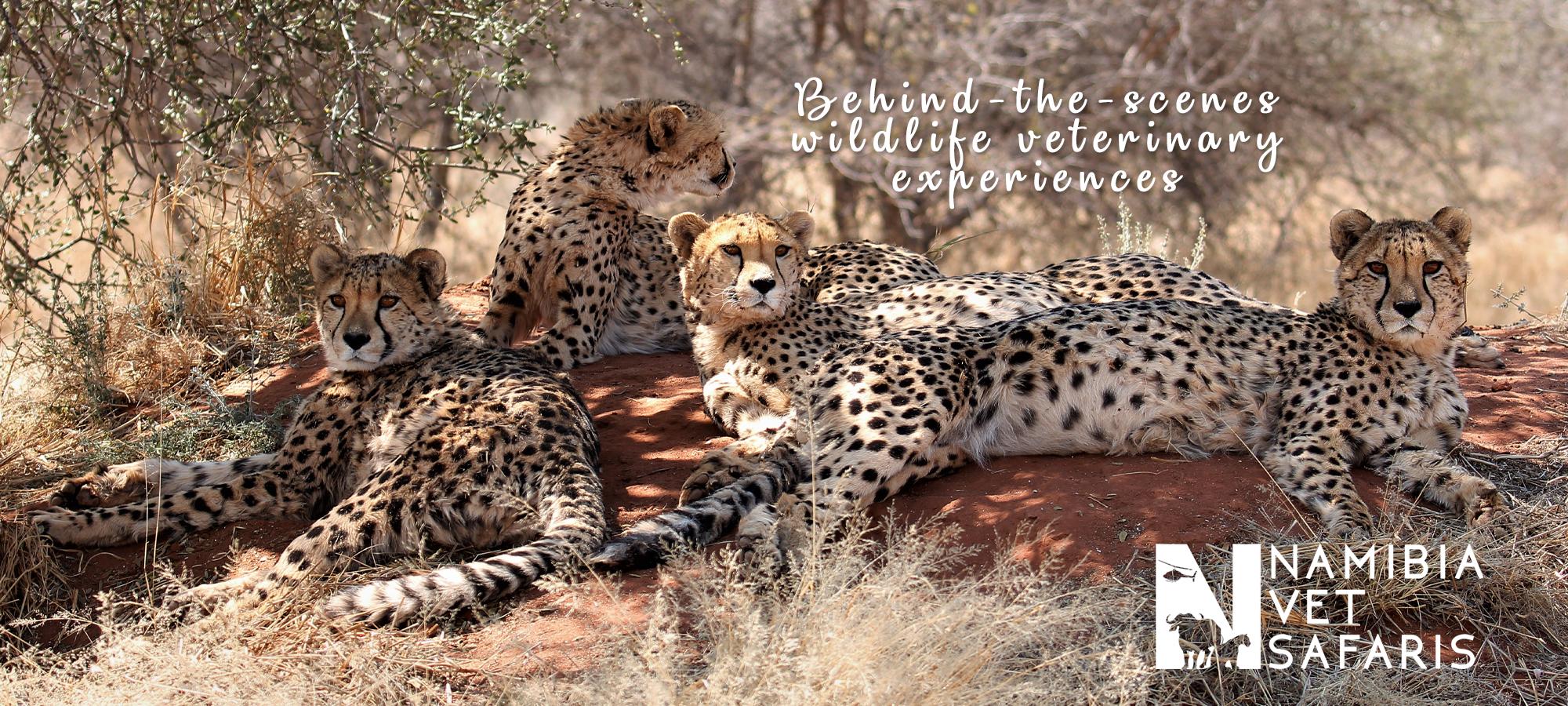 Namibia Vet Safaris